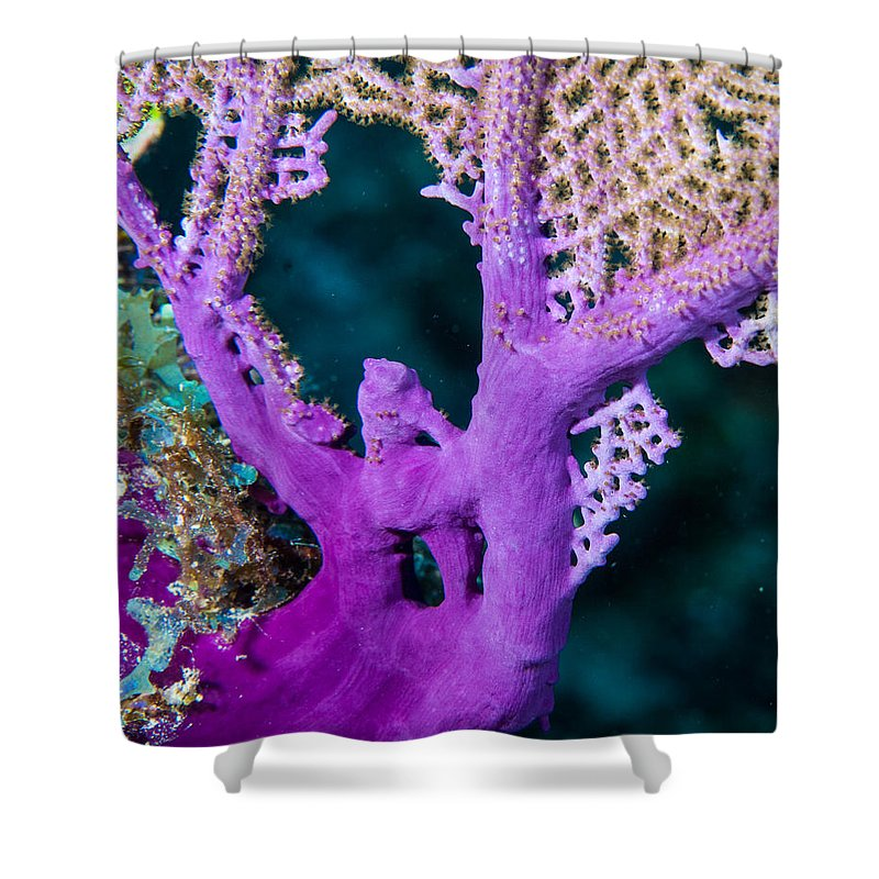 Coral Shower Curtain featuring the photograph Purple Coral by Jean Noren