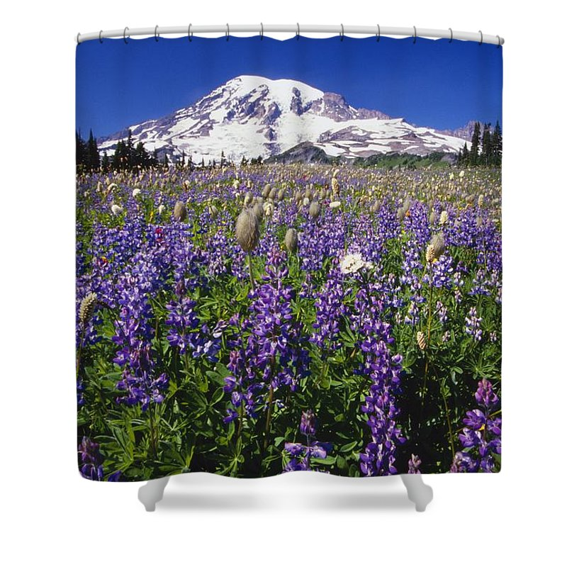 Washington Shower Curtain featuring the photograph Purple Flowers Blooming Beneath Mount by Natural Selection Craig Tuttle