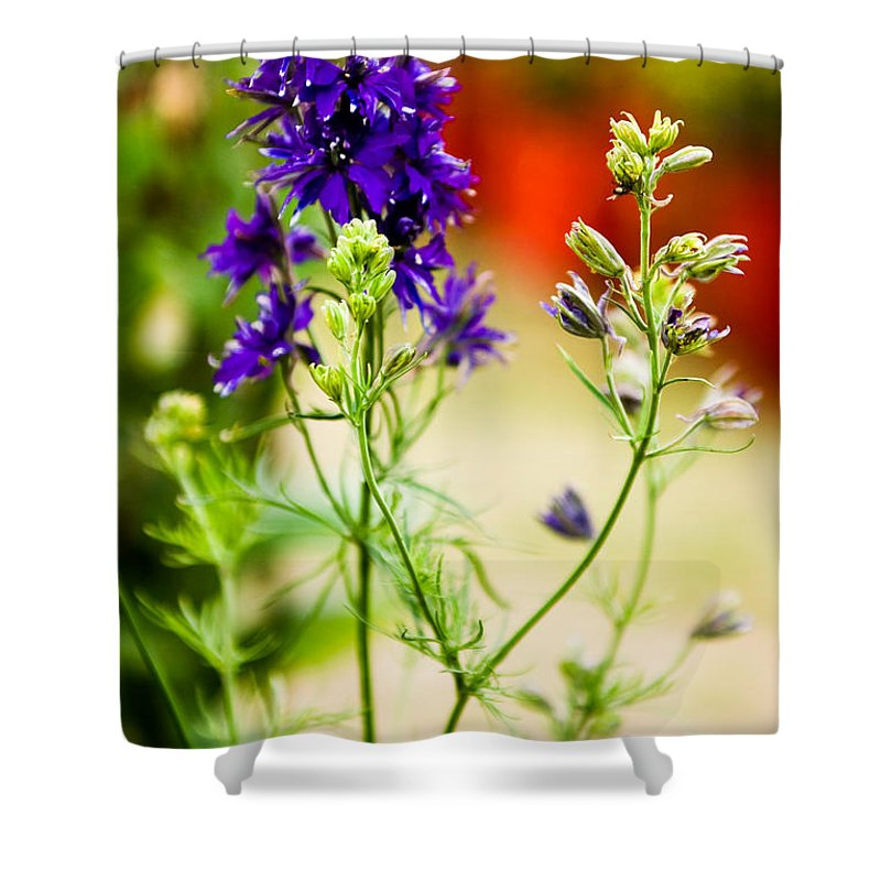 Flower Shower Curtain featuring the photograph Purple Flowers by Syed Aqueel