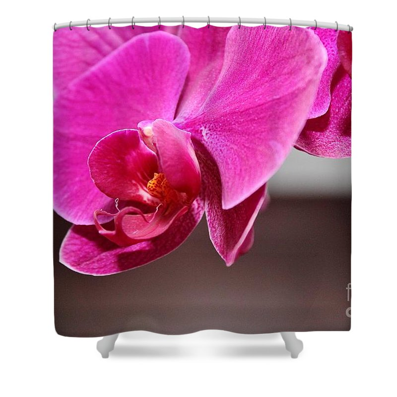 Flowers Shower Curtain featuring the photograph Purple Haze by Rene Triay Photography
