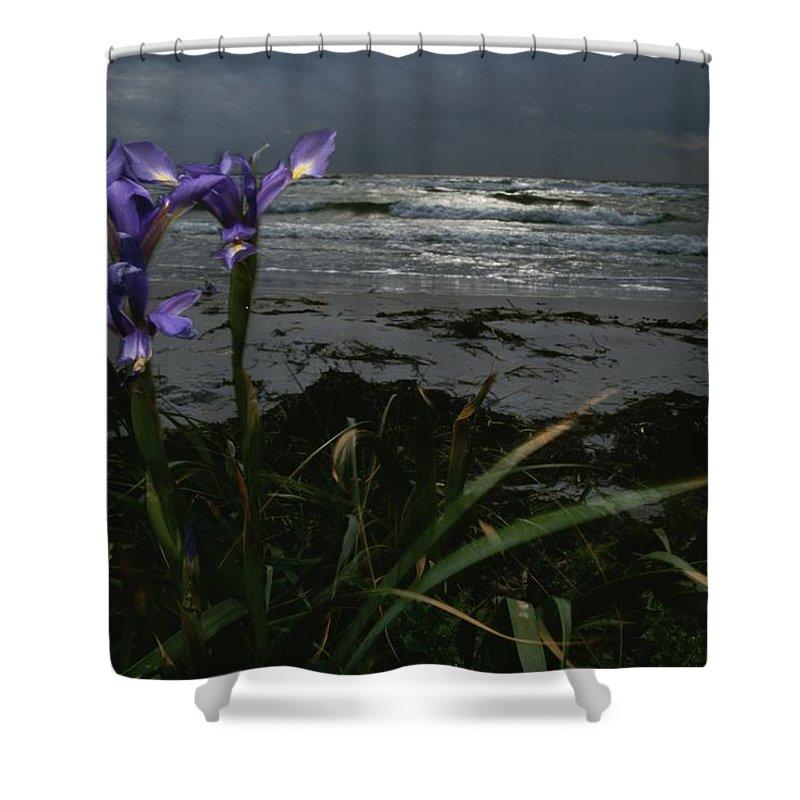 Plants Shower Curtain featuring the photograph Purple Irises On Beach by Mattias Klum