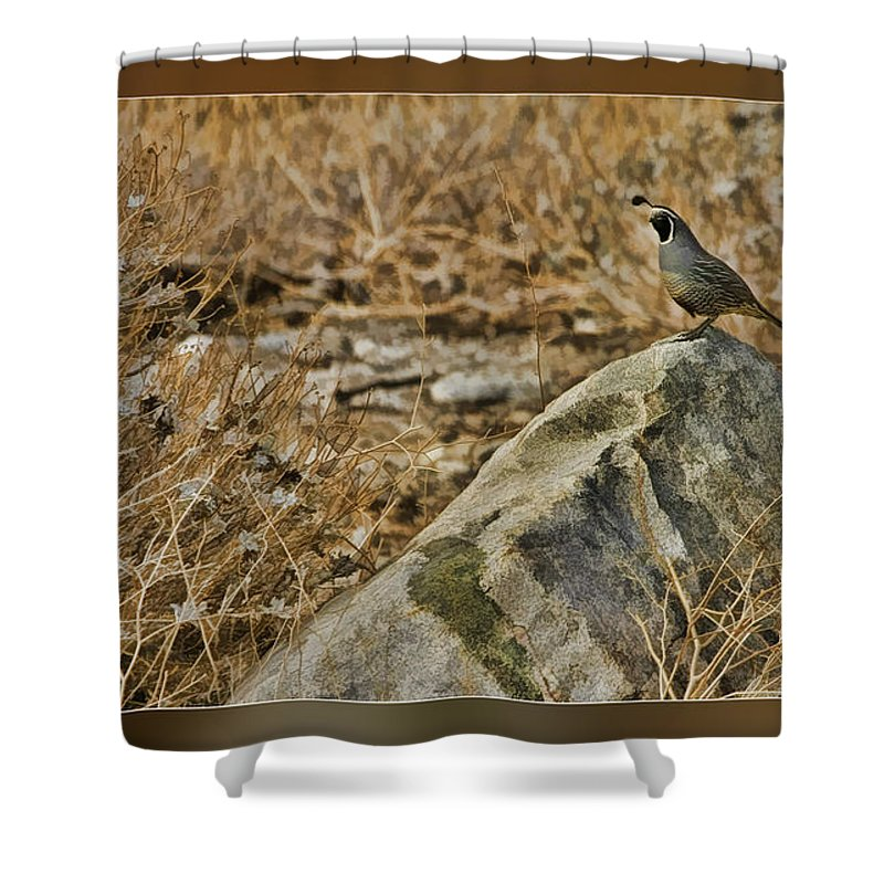 Fine Art Photographers Shower Curtain featuring the photograph Quail On Rock by Blake Richards