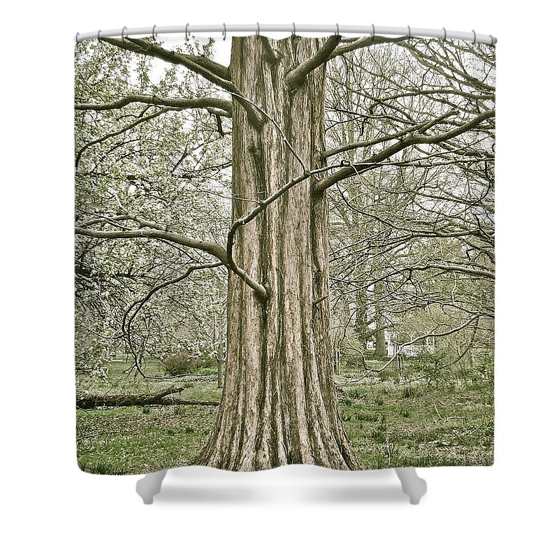 Tree Winter Leafless Shower Curtain featuring the photograph Quiet Tree by Alice Gipson