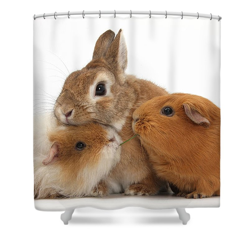 Nature Shower Curtain featuring the photograph Rabbit And Guinea Pigs by Mark Taylor