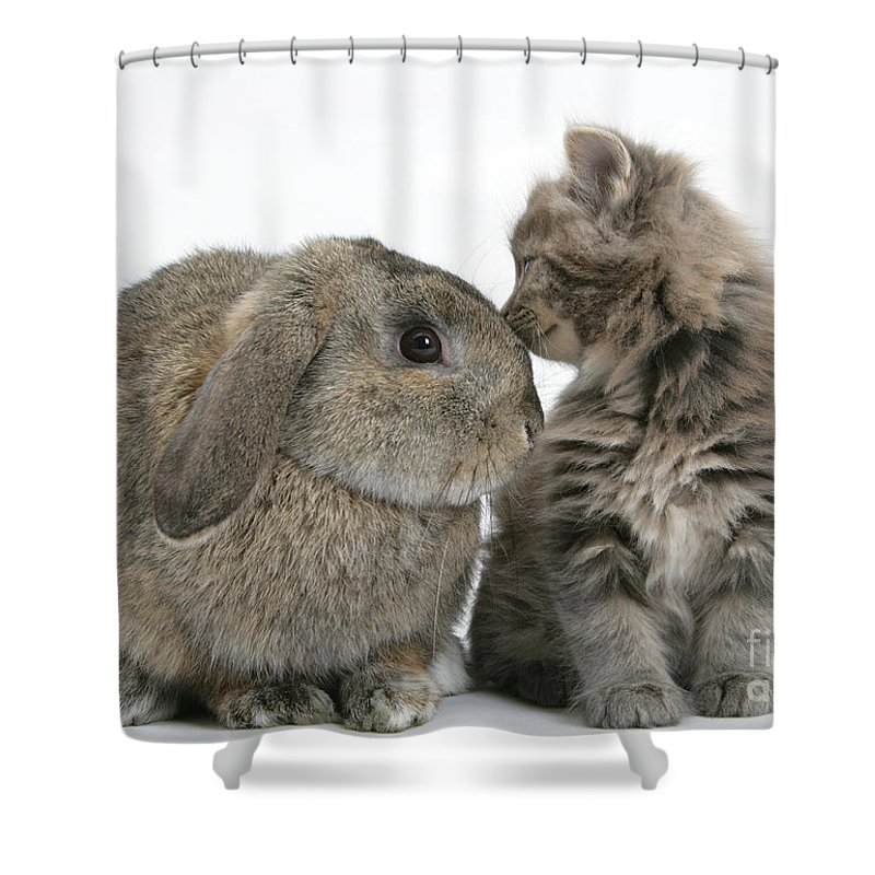 Animal Shower Curtain featuring the photograph Rabbit And Kitten by Mark Taylor
