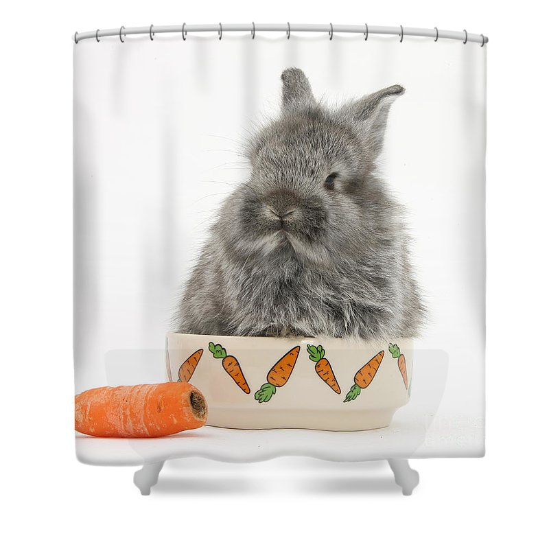 Nature Shower Curtain featuring the photograph Rabbit In A Food Bowl With Carrot by Mark Taylor
