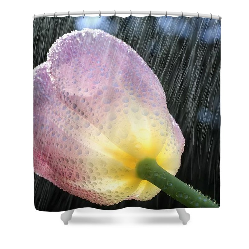 Flower Shower Curtain featuring the photograph Rain Falling On A Tulip by Craig Tuttle