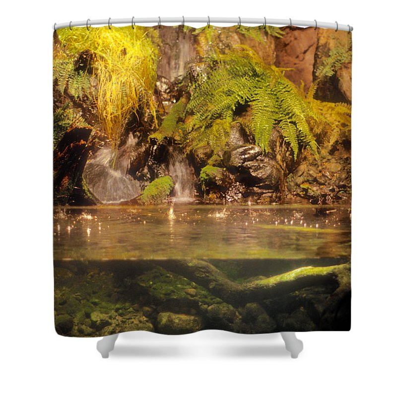 Baltimore Shower Curtain featuring the photograph Rain Forest Pool by Mark Dodd