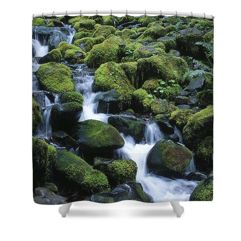 Rainforest Shower Curtain featuring the photograph Rain Forest Stream by Sandra Bronstein