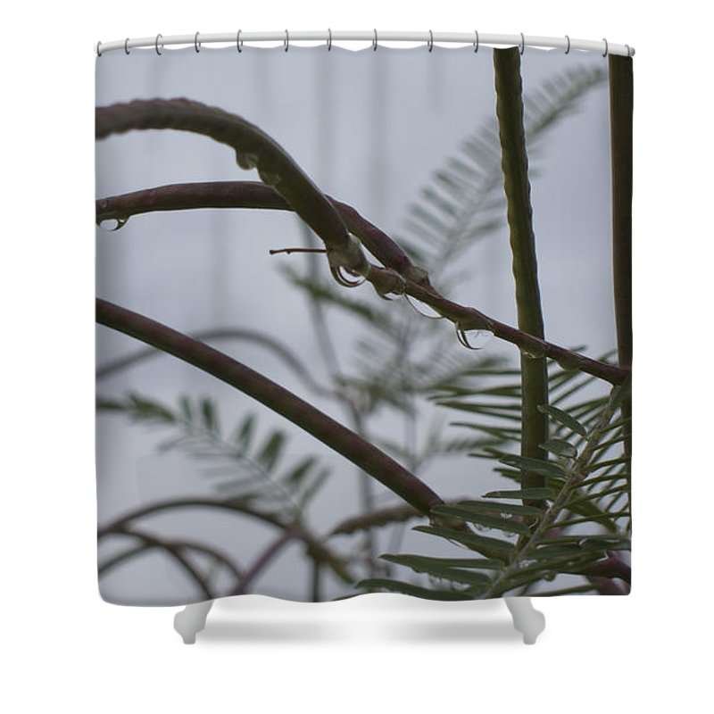 Raindrops Shower Curtain featuring the photograph Raindrops by Douglas Barnard