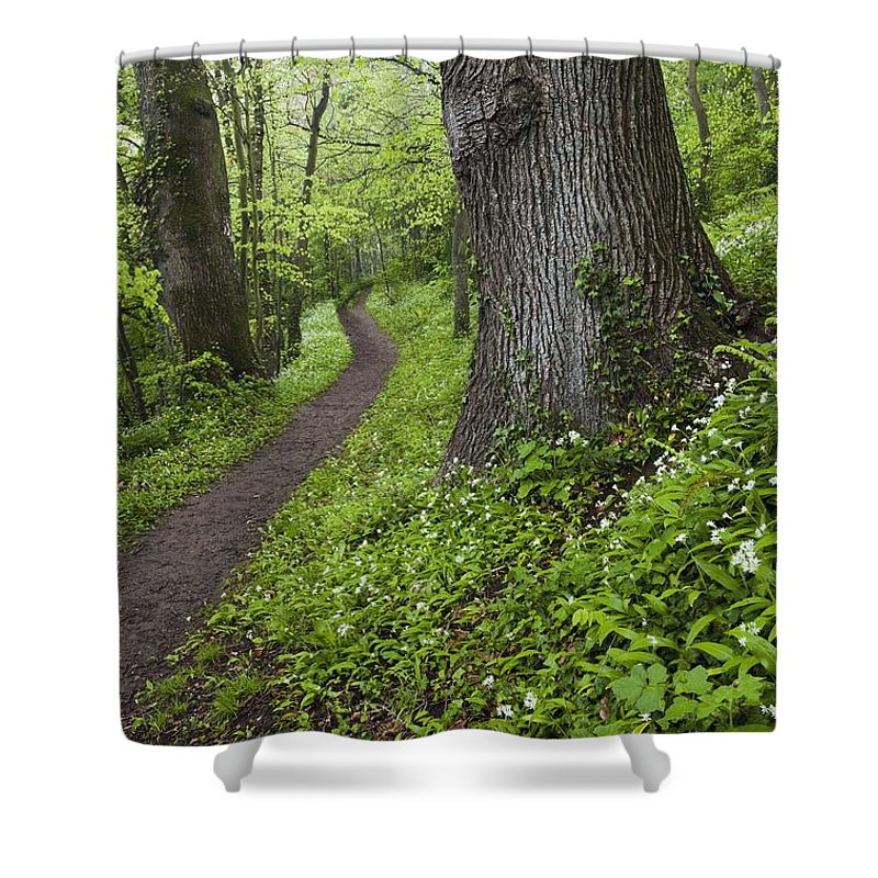 Path Shower Curtain featuring the photograph Ramsons By Path In Woods, County Louth by Peter McCabe
