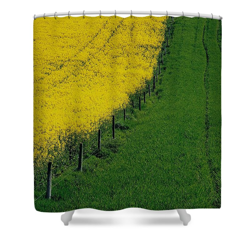 Color Image Shower Curtain featuring the photograph Rapeseed Growing In A Field, Ireland by The Irish Image Collection