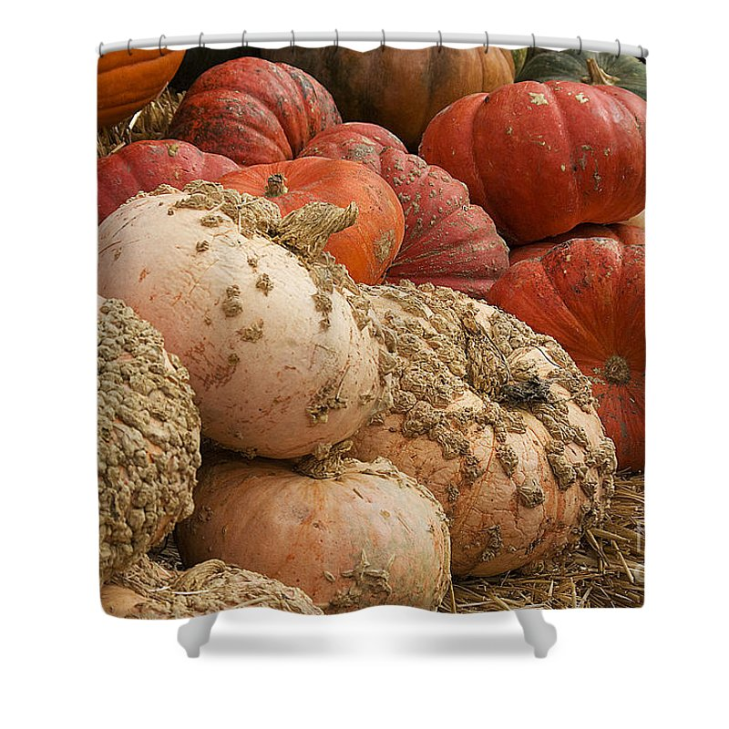 Fall Shower Curtain featuring the photograph Rare Pumpkins by Jim And Emily Bush