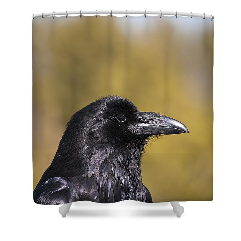 Raven Shower Curtain featuring the photograph Raven by Derek Holzapfel