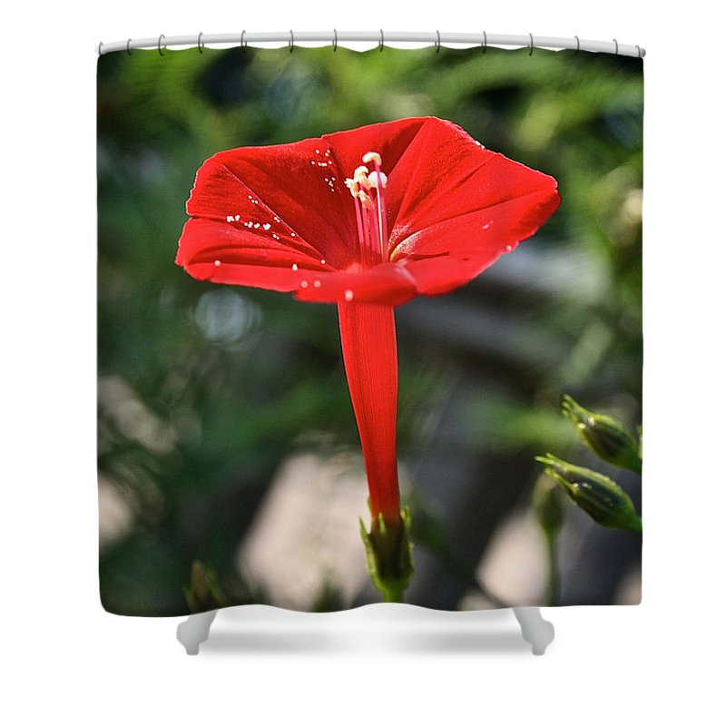 Outdoors Shower Curtain featuring the photograph Real Red by Susan Herber