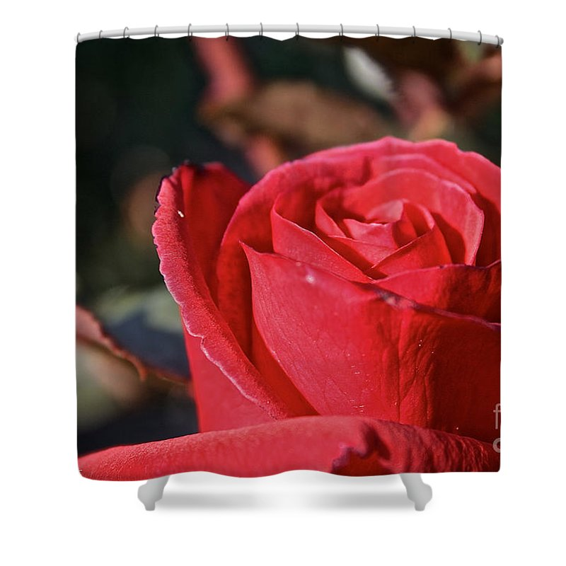 Flower Shower Curtain featuring the photograph Red And Ready For Review by Susan Herber