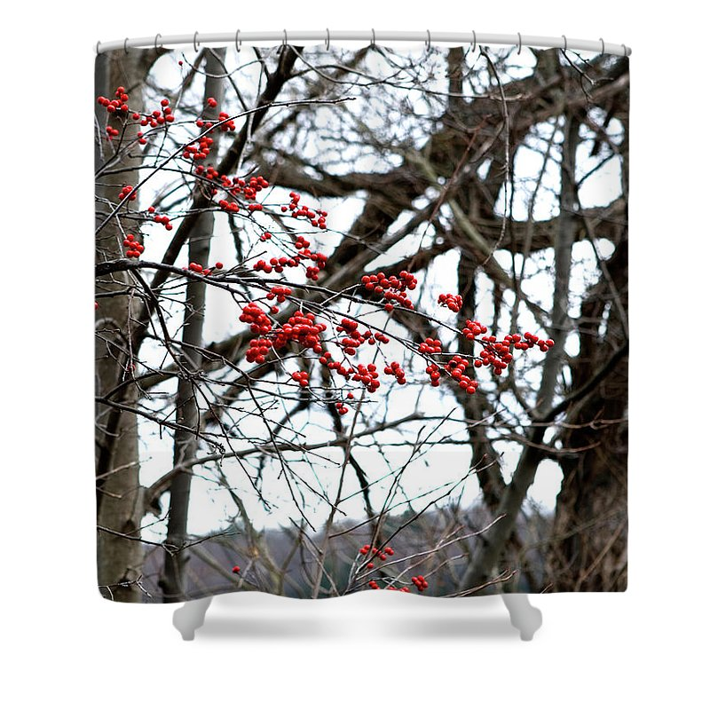 New York Shower Curtain featuring the photograph Red Berries White Sky by Lorraine Devon Wilke