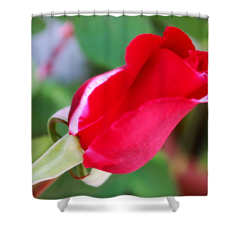 Augusta Stylianou Shower Curtain featuring the photograph Red Bud by Augusta Stylianou