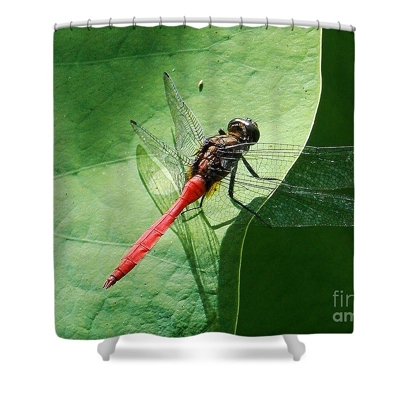 Photography Shower Curtain featuring the photograph Red Dragonfly     by Kaye Menner