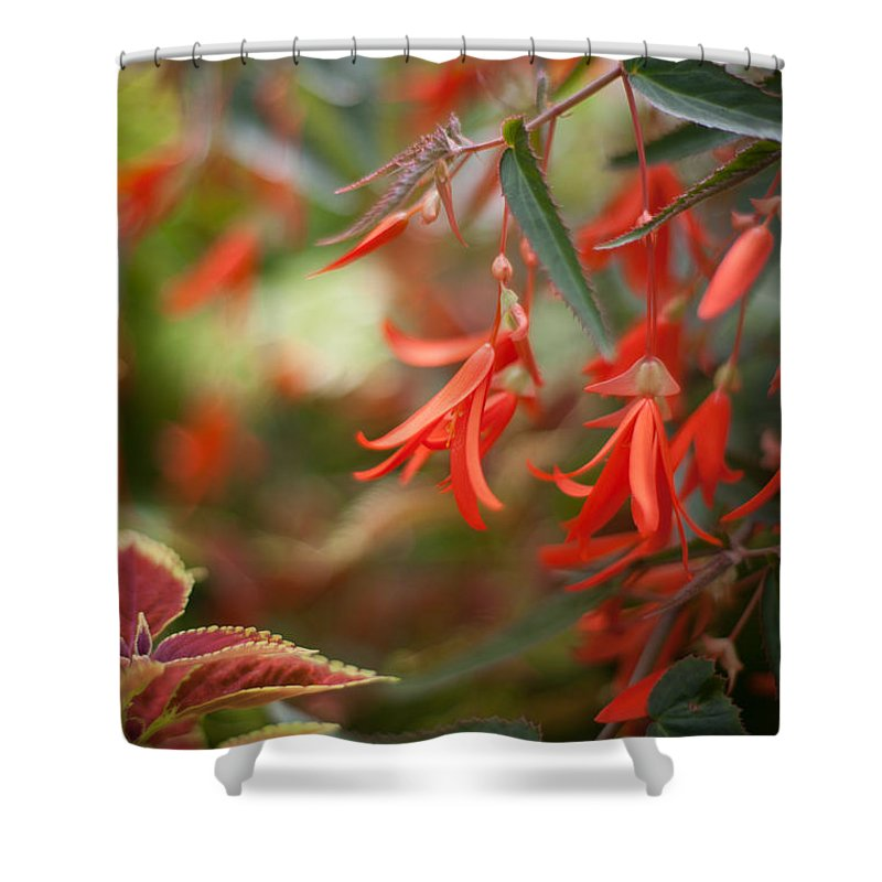 Flower Shower Curtain featuring the photograph Red Exotic by Mike Reid