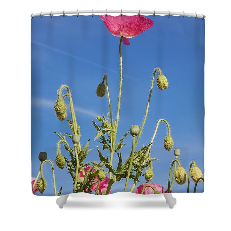 Craig Shower Curtain featuring the photograph Red Flower Against Blue Sky by Craig Tuttle