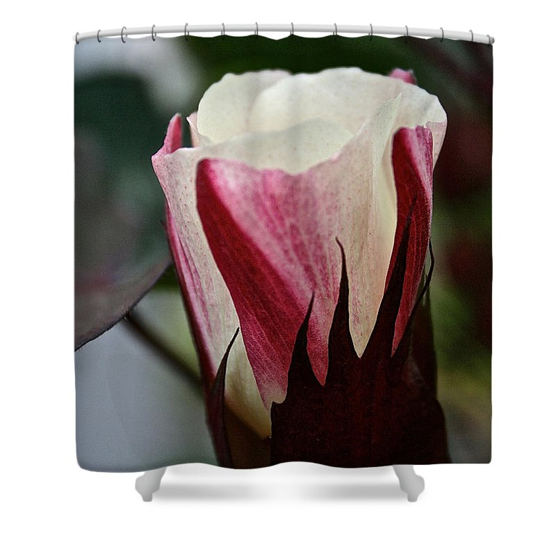 Outdoors Shower Curtain featuring the photograph Red Foliated White by Susan Herber