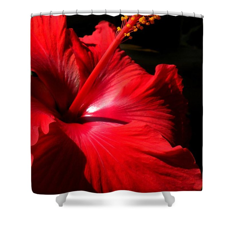 Flowers Shower Curtain featuring the painting Red Hibiscus by Renate Nadi Wesley