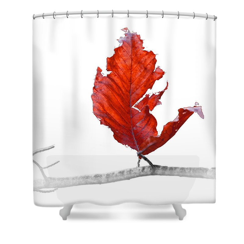 Art Shower Curtain featuring the photograph Red Leaf Of Autumn On White by Randall Nyhof