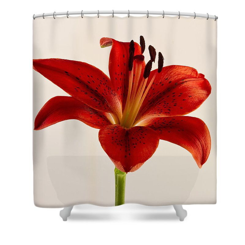 Red Lily Shower Curtain Featuring The Photograph Number Three By Bill Swindaman