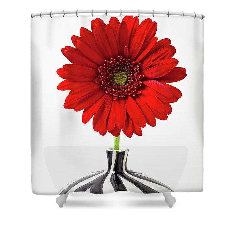 Mums Flowers Chrysanthemums Shower Curtain featuring the photograph Red Mum In Striped Vase by Garry Gay