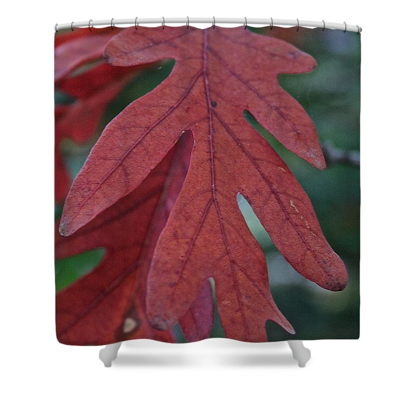 Outdoors Shower Curtain featuring the photograph Red Oak Leaf by Susan Herber