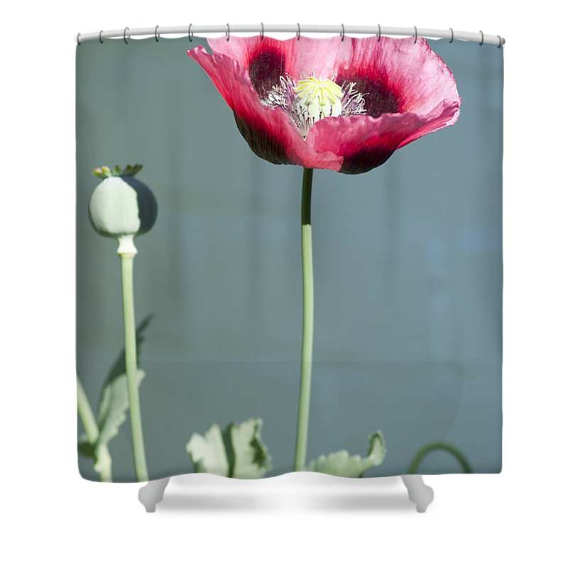 England Shower Curtain featuring the photograph Red Opium Poppy by Andrew Michael