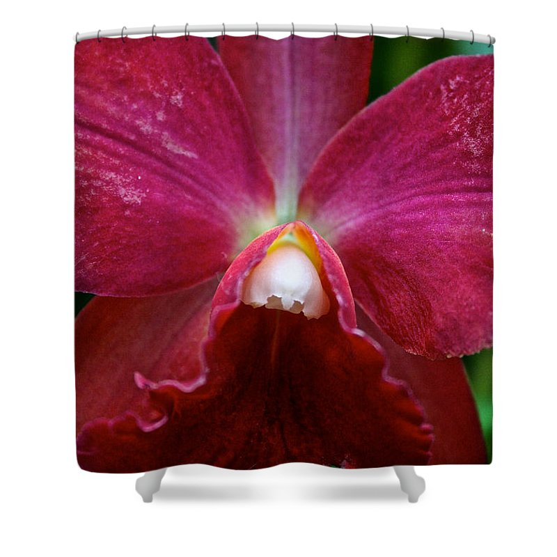 Tropical Plant Shower Curtain featuring the photograph Red Orchid by Susan Herber