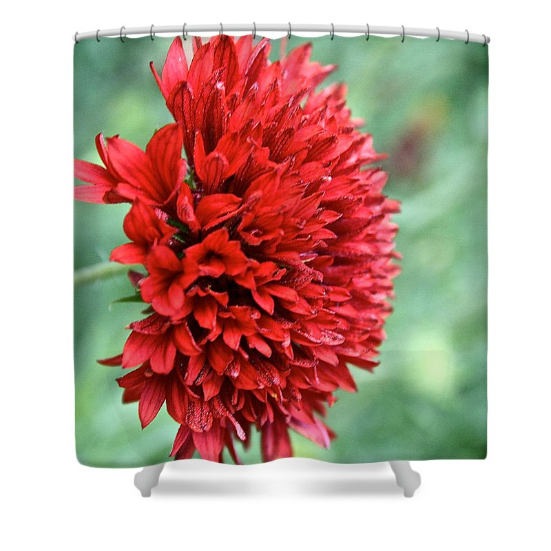 Plant Shower Curtain featuring the photograph Red Plume by Susan Herber