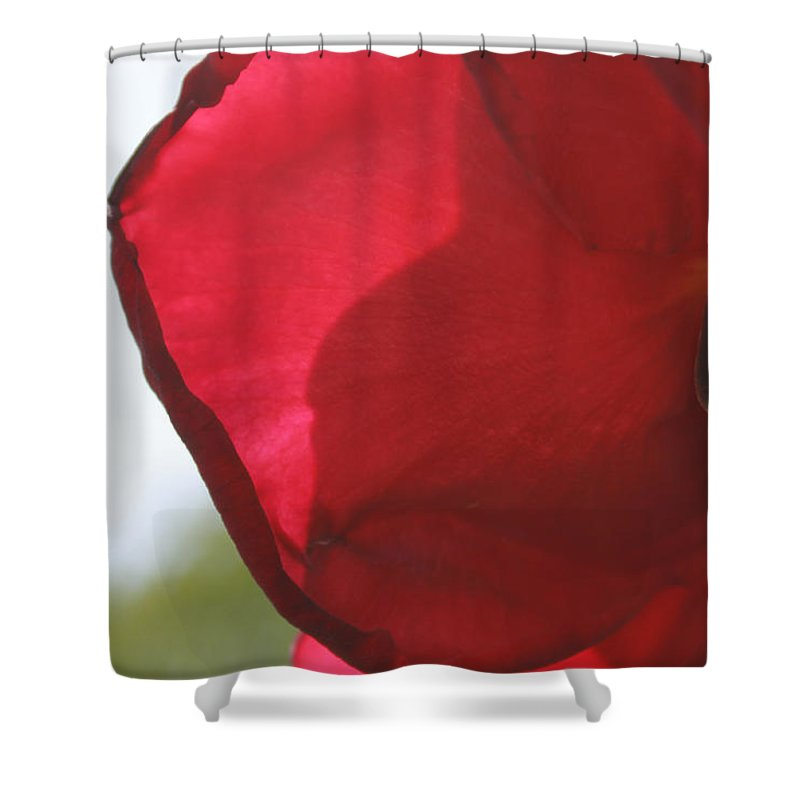 Augusta Stylianou Shower Curtain featuring the photograph Red Rose Petal by Augusta Stylianou
