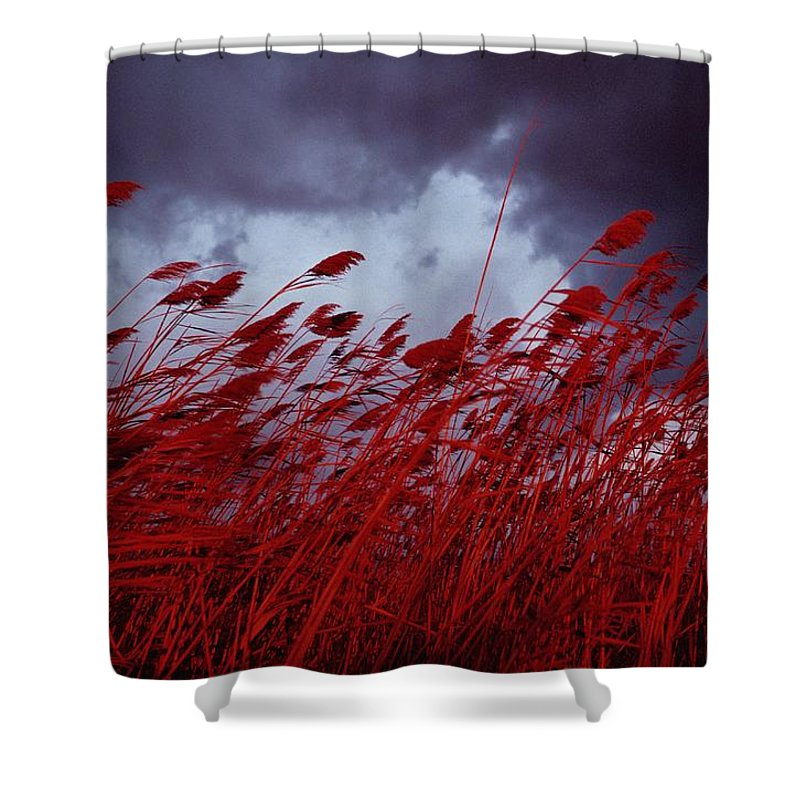 Sea Oat Grass Shower Curtain featuring the photograph Red Sea Oats Blow In The Wind by Medford Taylor