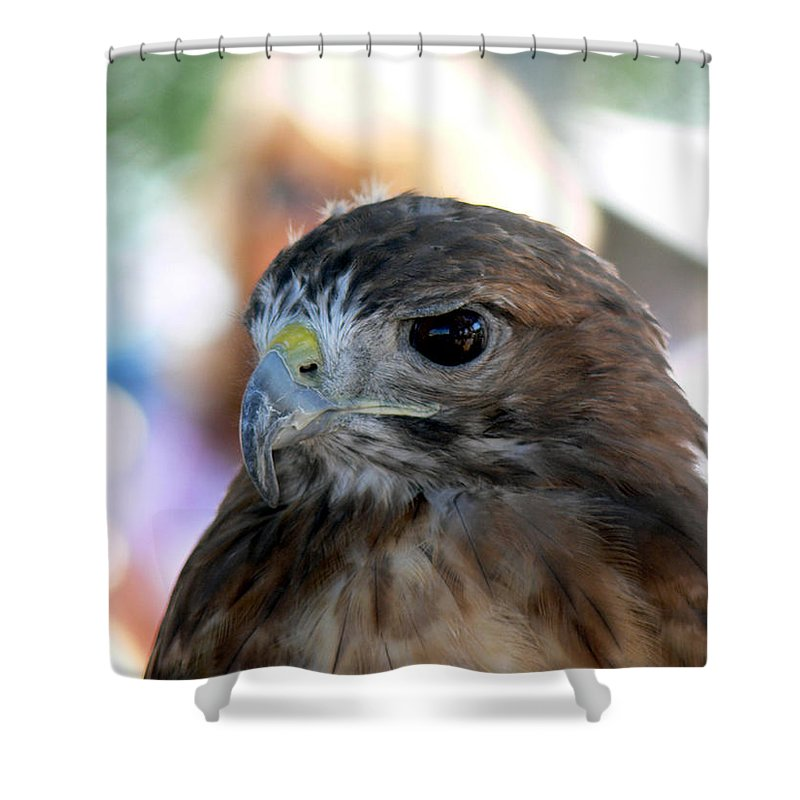 Bird Shower Curtain featuring the photograph Red-tailed Hawk by Ericamaxine Price