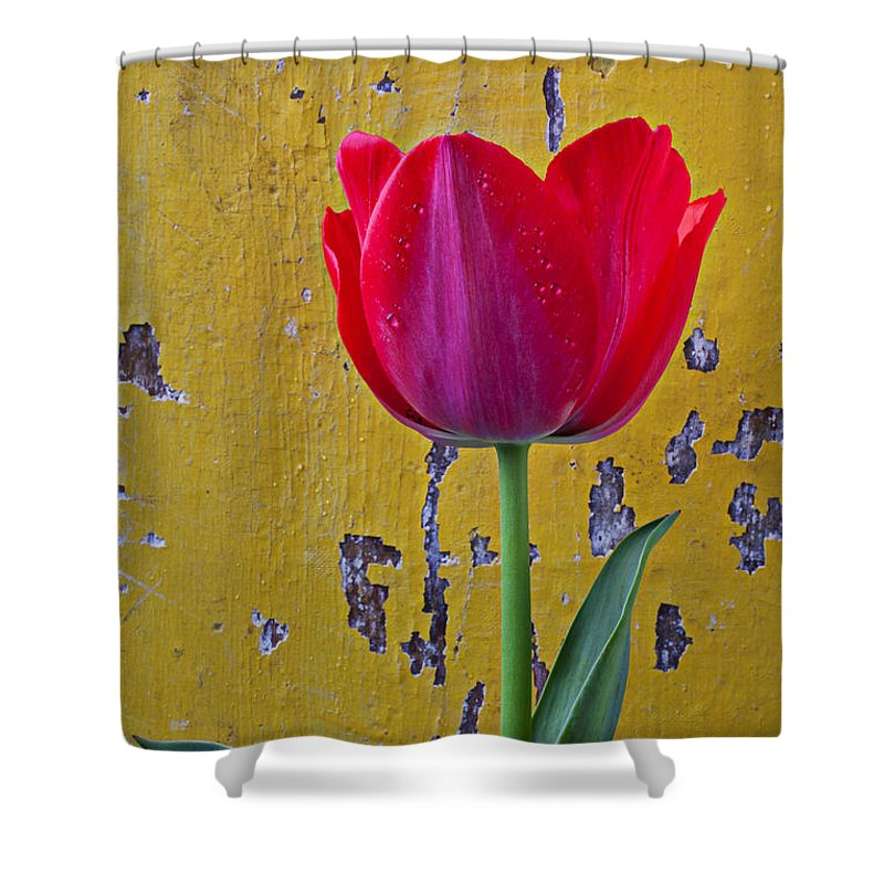 Red Shower Curtain featuring the photograph Red Tulip With Yellow Wall by Garry Gay