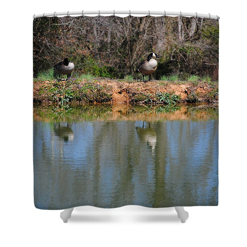 Goose Shower Curtain featuring the photograph Reflections by Jai Johnson