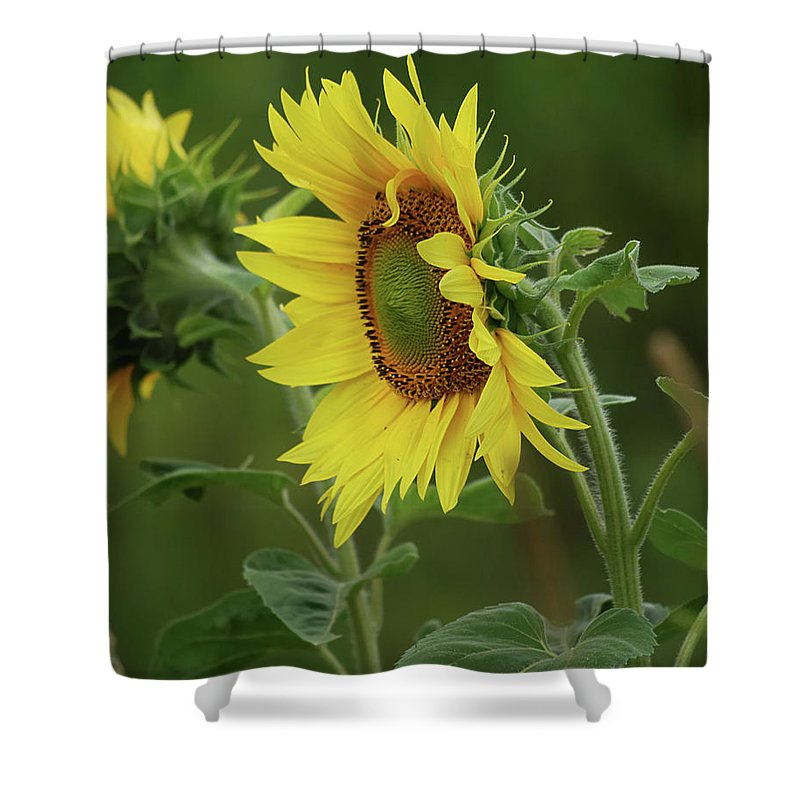 Nature Shower Curtain featuring the photograph Reflective by Susan Capuano