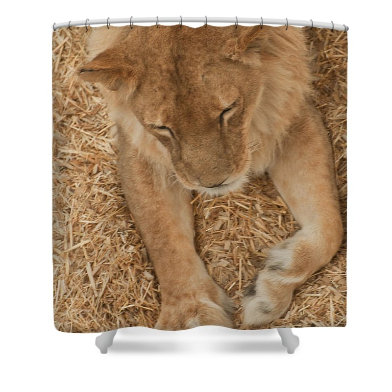Wild Shower Curtain featuring the photograph Rescued by Colleen Coccia