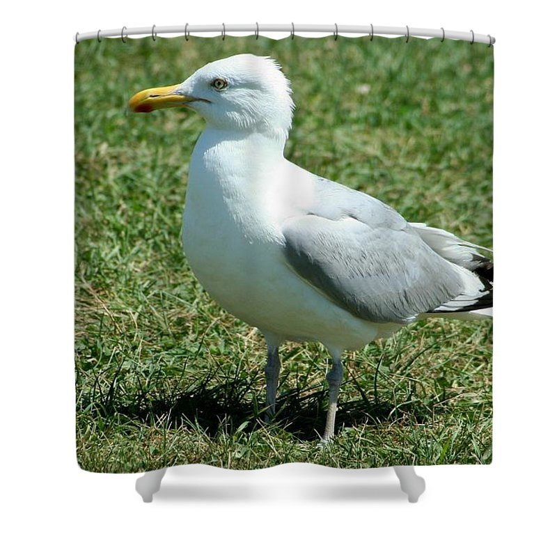 Beach Shower Curtain featuring the photograph Resting by Barbara S Nickerson