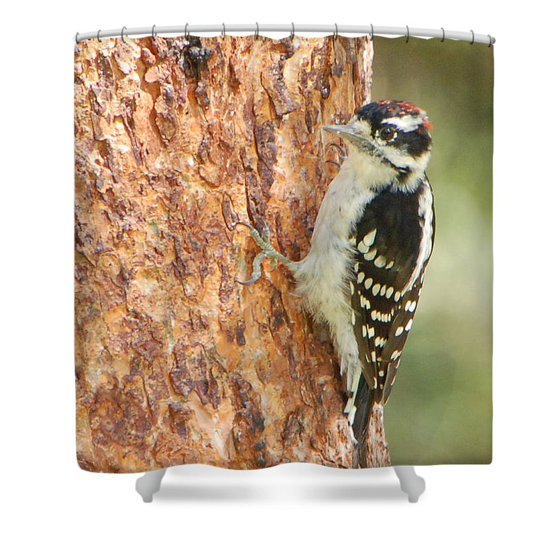 Birds Shower Curtain featuring the photograph Resting by Grace Grogan