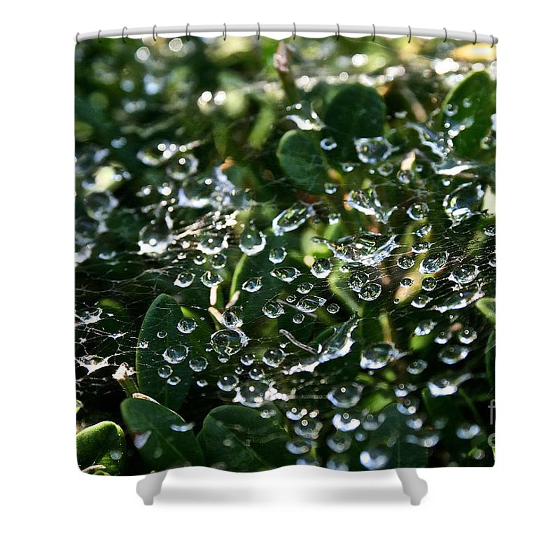 Outdoors Shower Curtain featuring the photograph Rhinestone Diamonds by Susan Herber