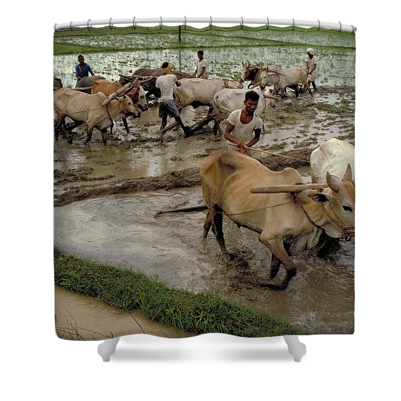 Rice Fields Shower Curtain featuring the photograph Rice Cultivation by Bernard Pierre Wolff