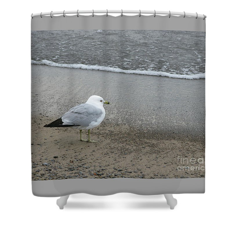 Ring-billed Gull Shower Curtain featuring the photograph Ring-billed Gull by Ann Horn