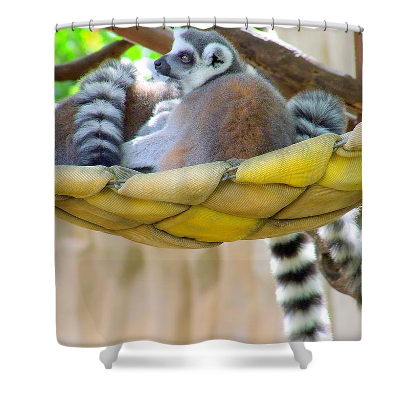 Lemur Shower Curtain featuring the photograph Ring-tailed Lemur by Mary Deal