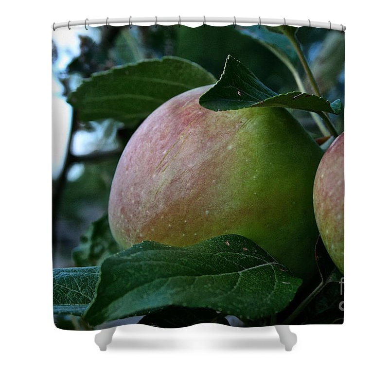 Outdoors Shower Curtain featuring the photograph Ripening Progress by Susan Herber