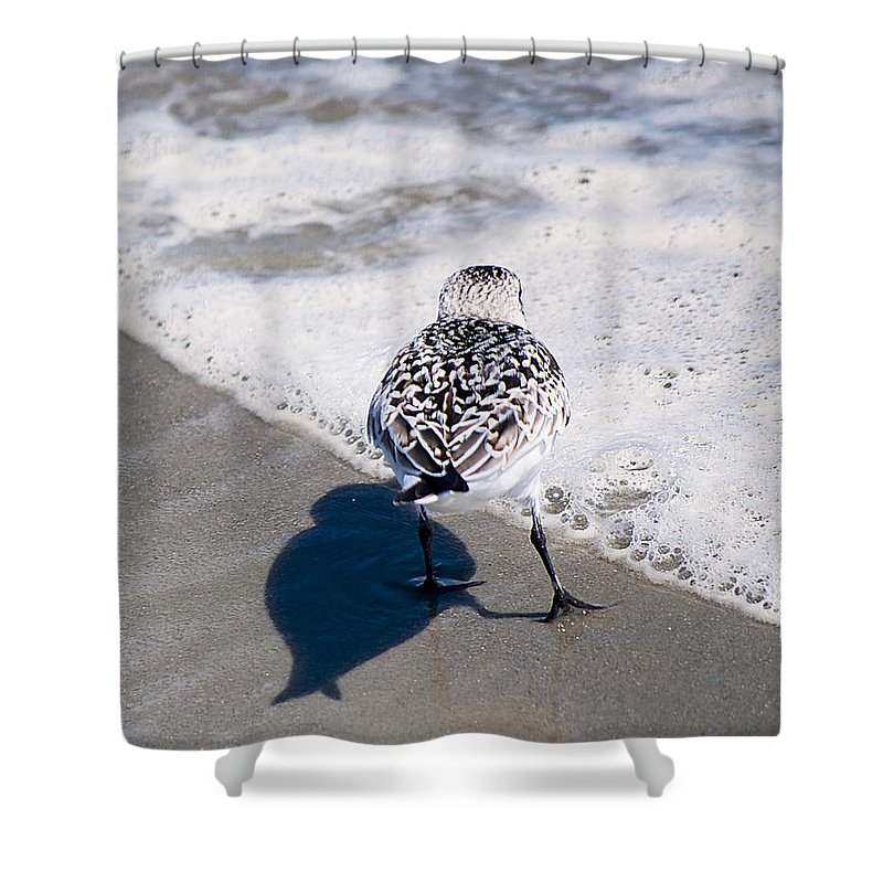Wildlife Shower Curtain featuring the photograph Rising Tide by Kenneth Albin