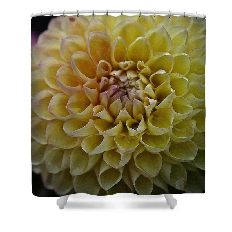 Dahlia Shower Curtain featuring the photograph Robin Hood Yellow by Susan Herber